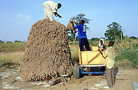 Mali. Province of Segou. Cinzana. Men at work in the fields. Sorghum harvesting and stacking in order to dry. The sorghum is a tropical graminaceous.  © 2003 Didier Ruef