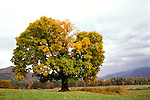 TN: Tennessee Great Smoky Mountains National Park, Mtns, Cades Cove, Fall color          .Photo Copyright: Lee Foster, lee@fostertravel.com, www.fostertravel.com, (510) 549-2202.Image: tnsmok210