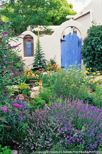 In the southwest and Rocky Mountain areas, water wise landscape designs come in all colors and shapes and incorporate a wide range of both nativespecies as well as appropriate adapted plants, ranging from succulents and cacti to endemic penstemons and traditional perennials.  A Santa Fe garden vignette features lavender, buddleia,poppies and other colorful and drought tolerant plants.