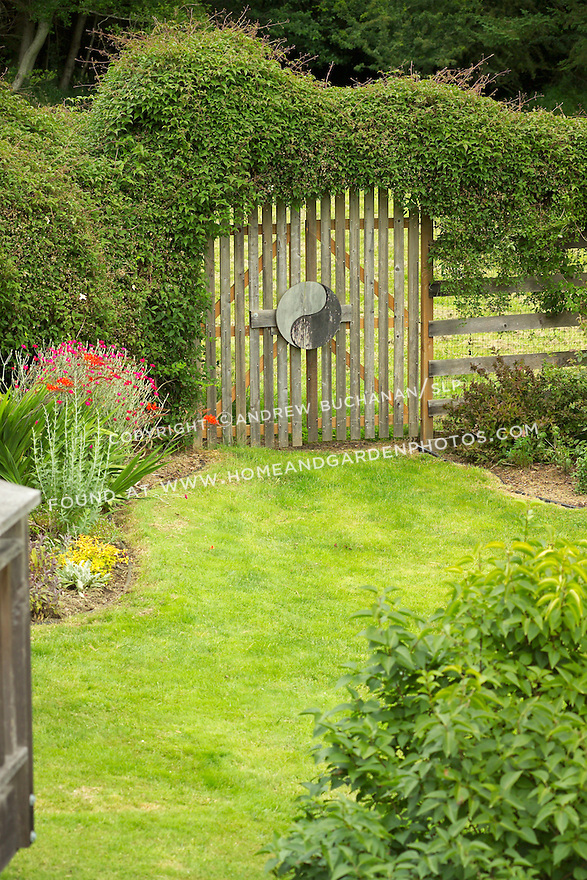 A clematis vine grows across the top of a wooden gate and fence in a Pacific Northwest garden.
