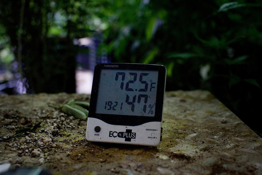 """Los Angeles, California, October 27, 2010 - A thermometer gives the precise temperature and humidity at the growing center for The Lazy Rabbit, which grows, processes and distributes medical cannabis to dispensaries in California as allowed by the California Compassionate Use Act, which allows people with a prescription to use and cultivate medicinal marijuana. Owner Aaron Thomas is very meticulous in how he runs his business from following the law - he has the phone number of the Sherriff in his wallet - to working to achieve the most consistent results with his plants. """"We need to be working together with doctors and scientists to find the most consistent product and get it to do what we need it to do."""" He has spent considerable time meeting with experts in the field to learn as much as he can about how to best grow his cannabis. Thomas uses older plants - which he calls his mothers - to pull a stalk from. He cuts back the base with a razor blade, then replants. Each new plant will be ready to produce buds in 7 to 9 weeks. The plant is then composted and the process begins again.There are different properties in Cannabis. One THC (Tetrahydrocannabinol) is the psychotropic one that gives the feeling of being 'high,' but another, CBD (Cannabidiol), is a medicial cannabinoid that has been shown to relieve convulsions, inflammation, anxiety, nausea and well as inhibit cancer cell growth. Currently Thomas' operation is not even breaking even because he allows people to pay what they can afford for it. """"My goal is to supply stable and consistent medical cannabis to facilitate the medical needs and to actually cure people."""" .."""