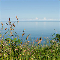 Calm sea through grass