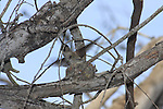 anna's hummingbird leaving nest