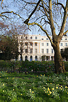 Daffodils bloom on a beautiful spring day in Regent's Park, London, England