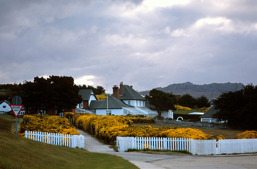 Barberry bushes bloom in front of the governor's residence in Port Stanley, Falkland Islands. Great Britain repelled an invasion by Argentine troops in 1982. Now 20 years later, many Argentines are visiting the islands for the first time. They are often greeted by wary Falklanders.