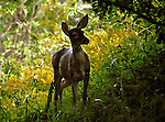 August 21, 2013 A doe familiar with the photographer