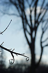 A tree branch, stripped of its branch tip is silhouetted against a light blue sky and its blurry big brother.