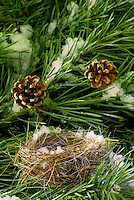 snow covered birds nest in pine tree with pine cones