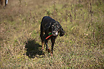Gordon Setter Shopping cart has 3 Tabs:<br /> <br /> 1) Rights-Managed downloads for Commercial Use<br /> <br /> 2) Print sizes from wallet to 20x30<br /> <br /> 3) Merchandise items like T-shirts and refrigerator magnets