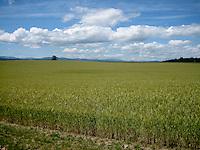 Oregon Agriculture