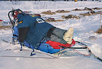 Musher rests at 101 checkpoint in the Yukon Quest 1000 mile race from Fairbanks Alaska to Whitehorse, Canada.