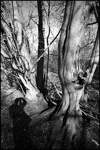 Shadow Selfie, Thorndon Woodland, Suffolk by Paul Cooklin
