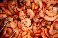 LITTLE ST. SIMONS ISLAND, FL -- October 2, 2010 -- Fresh Georgia shrimp are served on the beach on Little St. Simons Island on Saturday, October 2, 2010.   The 10,000 acres of marshland, beaches, and forests are a refuge for wildlife and vacationers alike with only 32 guests permitted a night.  (Chip Litherland for Bay Magazine)