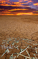 Think! ONLY BONES