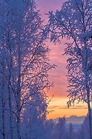 Winter sunrise over boreal forest and Alaska Mountain Range, Mount Moffit.