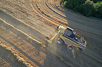 Farmer harvest wheat using combine harvesters