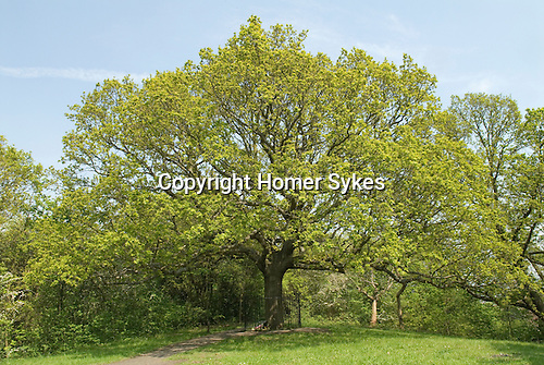 Honor Oak. South London. UK. Honor Oak is an inner suburban area principally of the London Borough of Lewisham with part in The London Borough of Southwark. The name originates from Oak of Honor Hill Elizabeth I picnicked with Sir Richard Bulkeley of Beaumaris in the Lewisham area by an oak tree at the summit of a hill. The tree came to be known as the Oak of Honor. The tree surrounded by railings is an oak