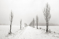 One of the many tree alleys at Stupinigi Park, in the immediate outskirts of Turin, Italy, under a nice snowfall. Stitched from four vertical frames.