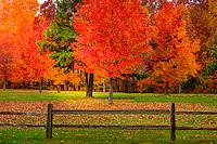Fall Colors Lake Monroe
