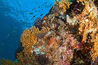 Coral Reef Scenic<br /> Sisters Cave.<br /> Isle De Rhonde<br /> Grenadines