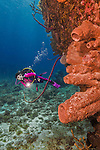 26 July 2015: SCUBA diver Sally Herschorn observes the sponges and corals at Ocean Pointe Reef, on the North Shore of Grand Cayman Island. Located in the British West Indies in the Caribbean, the Cayman Islands are renowned for excellent scuba diving, snorkeling, beaches and banking.  Mandatory Credit: Ed Wolfstein Photo *** RAW (NEF) Image File Available ***