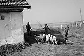 Sercaiia, Transylvania<br /> Romania<br /> April 30, 1992<br /> <br /> Branding sheep