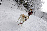 Woman walking Labrador dog in snowy winter weather Wintertime nature scenic