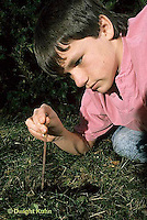 1Y06-009x  Earthworm - nightcrawler - boy collecting worms for bait - Lumbricus terrestris