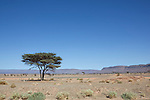 Desert landscape with Acacia tree and mountains near Tagounite, Sahara desert, Morocco.