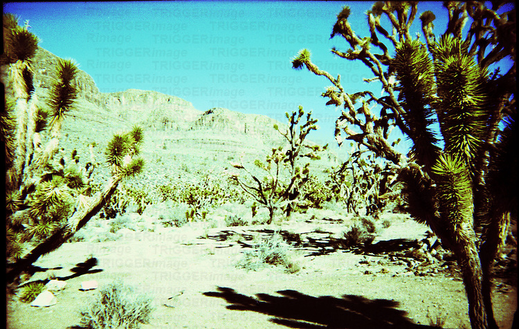 A desert scene with cactus plants