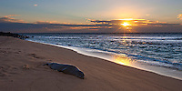 An endangered Hawaiian Monk seal rests at sunset on the remote Miloli'i beach on Kauai's rugged Na Pali coast.