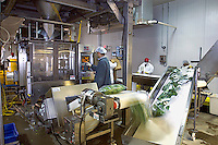 Agriculture - Interior of a bagged salad processing plant; machinery that fills and seals processed salad bags / Salinas Valley, California, USA.