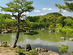 Pine trees at Japanese garden with a pond in Kyoto, Japan