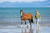 barefoot female walking horse along empty beach