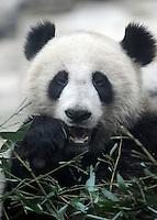China Earthquake Panda