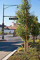 "Ginkgo trees fill the northern median of the Grand Ave (sign visible) and Longview intersection. This was part of the 2015 rebuild of the Grand Avenue and Longview Drive intersection for Diamond Bar's 2015 ""Grand Avenue Beautification"" project, landscape architecture for the project was by David Volz Design."