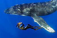 underwater photographer and humpback whale, Megaptera novaeangliae, Hawaii, Pacific Ocean, model released