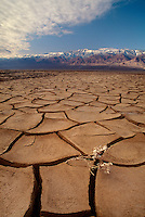 739650036 dried mud flats near the devils golf course in the arid plains below the panamint mountains in death valley national park californai