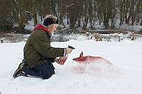 Kinder bauen einen Fuchs, Rotfuchs aus Schnee, Schneefigur wird mit Erdpigmenten eingefärbt