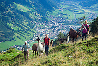 Hiking with Lama's? It's Possible in Bad Hofgastein, Austria