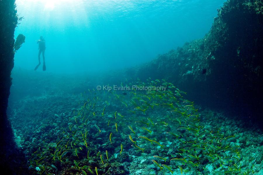 Scuba diver in Octopus Cave, Cuba