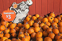 Pumpkins for sale in Autumn at a farm in Vermont
