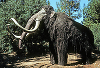 Pre-historic Animals: Woolly Mammoth. Early Pleistocene (1 million years ago). 9 ft. at shoulder; tusks to 12 ft. Africa, Eurasia, North America.