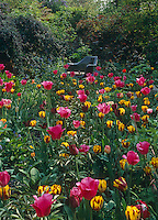 An Eames DAR chair in a garden filled with yellow and pink tulips
