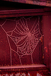 Spider web with frost in winter against farming equipment