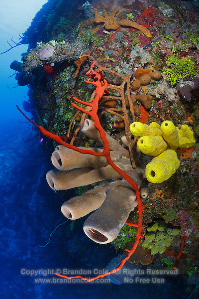 TR2025-D. Reef wall decorated in colorful sponges. Many species shown here, including red Erect Rope Sponge (Amphimedon compressa), yellow Branching Tube Sponge (Aiolochroia crassa), and tan Tubulate Sponge (Agelas tubulata). Cayman Islands, Caribbean Sea.<br /> Photo Copyright &copy; Brandon Cole. All rights reserved worldwide.  www.brandoncole.com