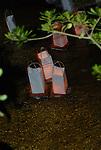 Floating Lanterns -Bon Festival , Morikami Center, Japanese Festival a Tribute to the Dead.