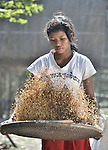 A young woman winnows rice in the Cambodian village of Somrith.