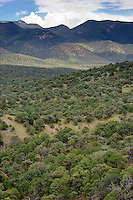 711900004 mountains and native trees in open rolling hills of cochise county arizona