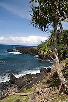 A lauhala tree overlooks the peninsula between Honolulu Nui Bay and Kipakaone Bay in Nahiku, off the road to Hana, Maui.